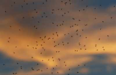 комары в небе