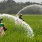 сеяние рис в Корее
