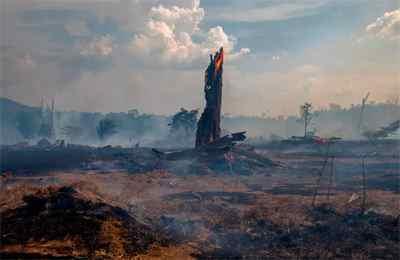 сгоревший лес в Бразилии