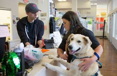собака на осмотре в клинике
