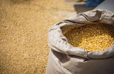 мешок кукурузы