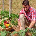 фермер по органике