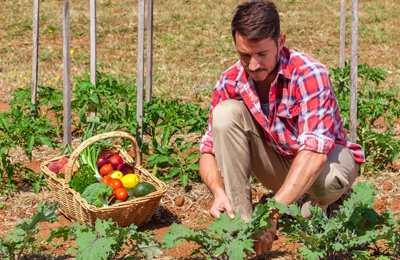 органический фермер