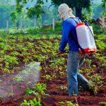 таец поливает свой урожай глифосатом
