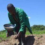 исследование хлопка в Кении