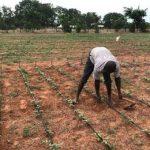 возделывание земли в Гане