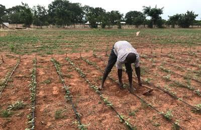 фермер в Гане