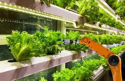 робот поднимает капусту