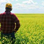 фермер на цветущем поле