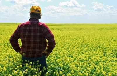 фермер на поле с канолой