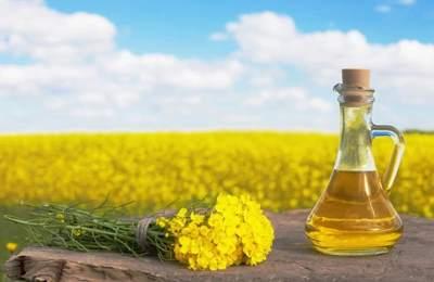 масло из ГМО-канолы