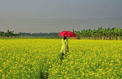 девушка на цветущем поле