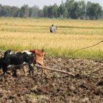 эфиопский фермер на поле