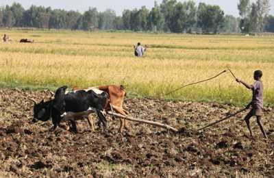 Эфиопия ГМО