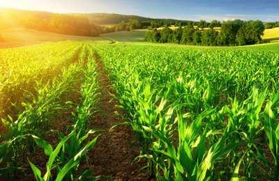 органическое фермерство