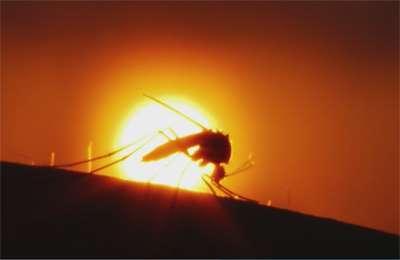 испытание комаров