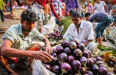 Индия рынок ГМО