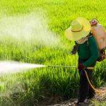 зеленое поле пестициды