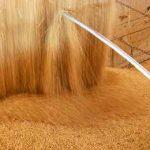 Китай утвердил ГМО сою