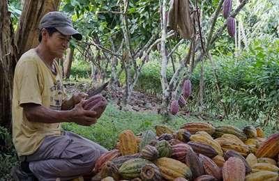 органическое хозяйство фермер