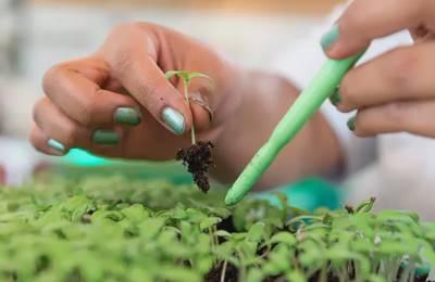 Новый Южный Уэльс ГМО