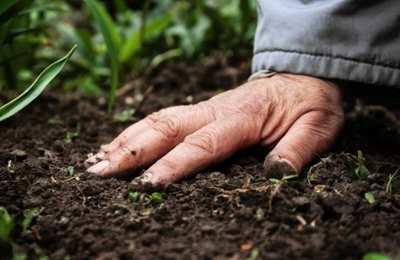 развитие бактерий в почве