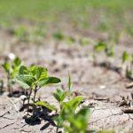 контроль ГМО в Канаде