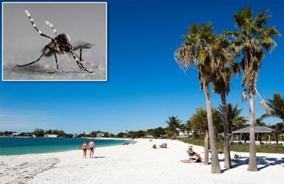 ГМО комары во Флориде