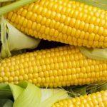 красивая кукуруза