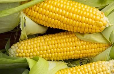 свежая кукуруза