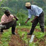 фермеры Нигерии