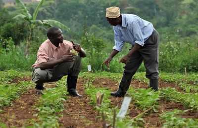 нигерийские фермеры