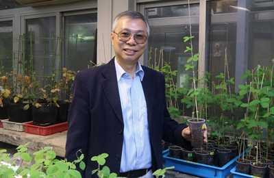 профессор Лам Хон-Минг