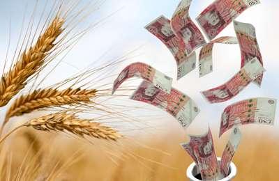 пшеница и деньги