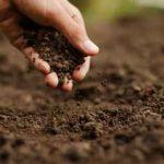 почва для культур