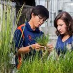 рекомендации для ГМО культур